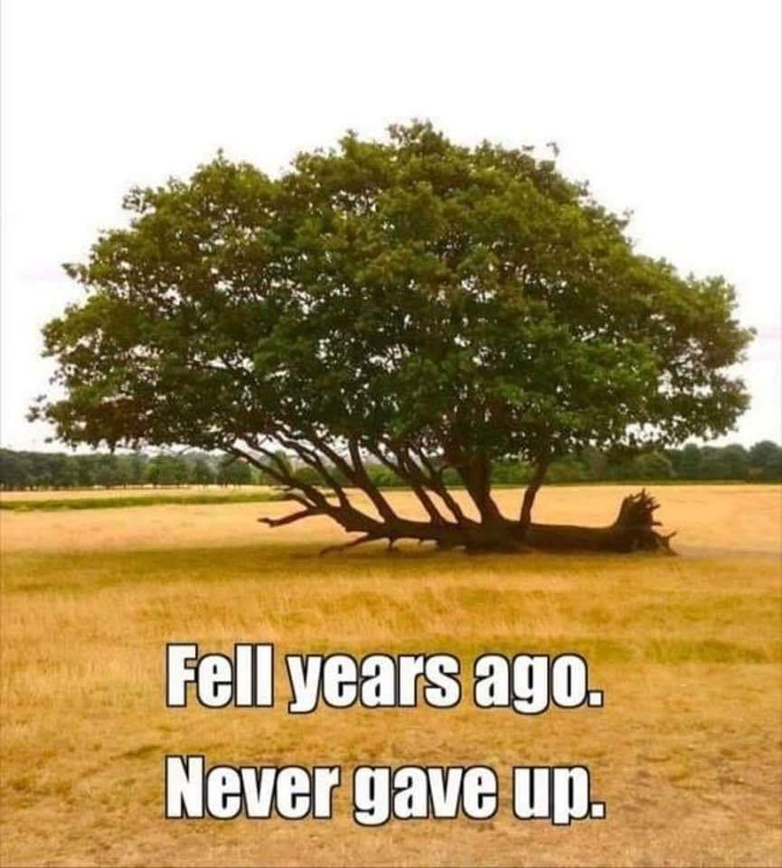 A Tree Fell years ago. Never Give up