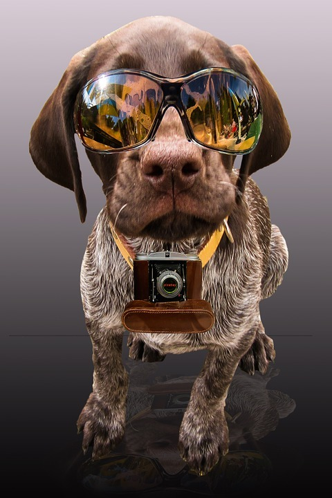 A dog with sunglass and camera looks funny