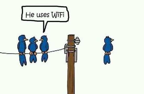 Parrot he uses wifi funny pic