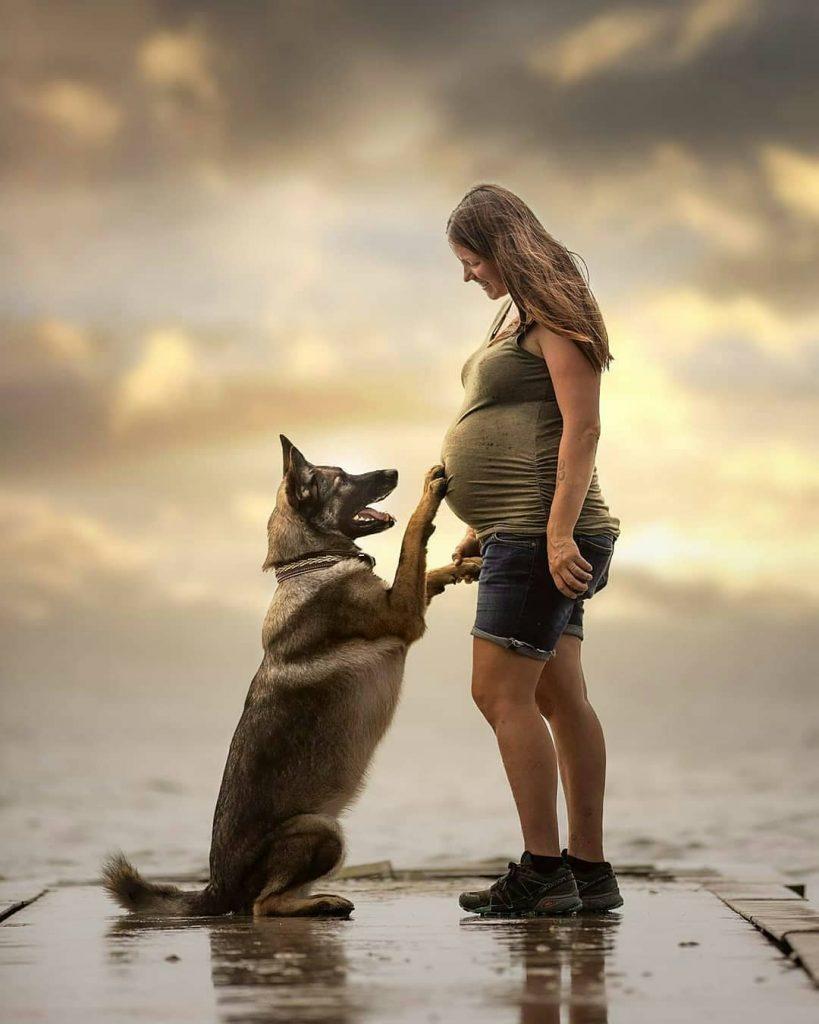 german shepherd dog with pregnant woman