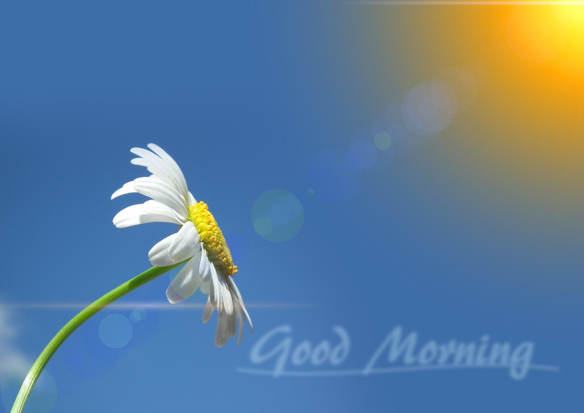 good morning nature HD pic