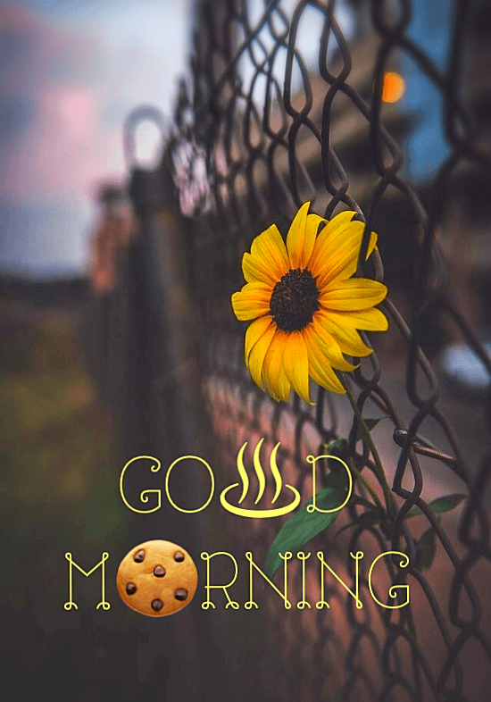 beautiful sceneries with good morning