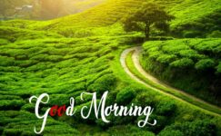 Good Morning Nature Images HD, Quotes Free Download