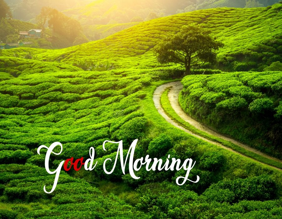 Good Morning Nature Images Hd Quotes Free Download