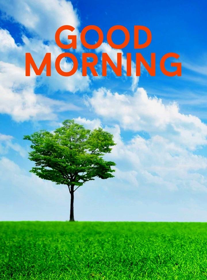 good morning image nature