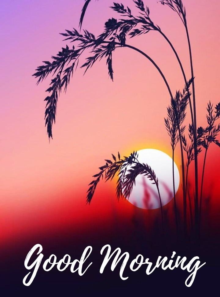 good morning message with nature