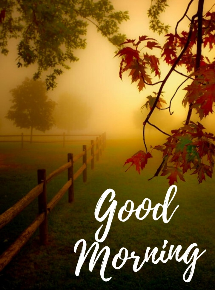 nature images good morning