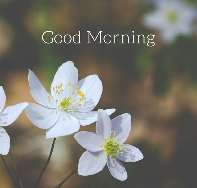 201 Good Morning Flower Images Free Download 2021