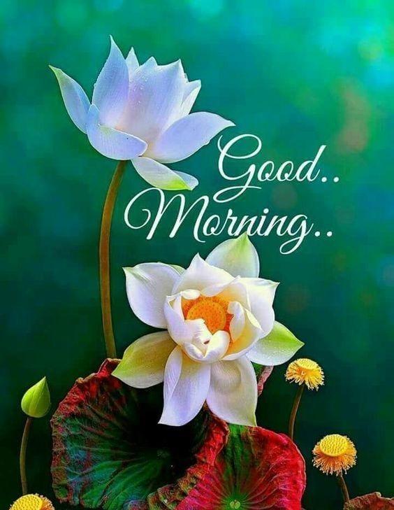 201 Good Morning Flower Images Free Download 2021