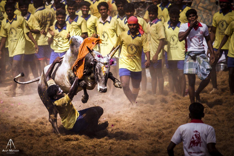 kangayam kaalai hd images download